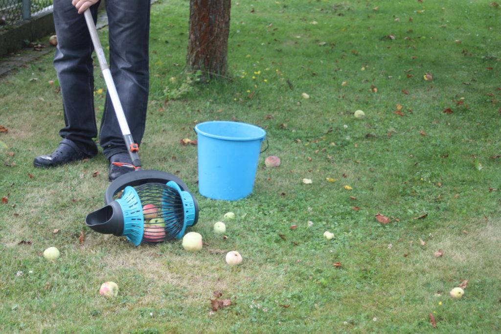 Fallobstsammler sammelt Äpfel