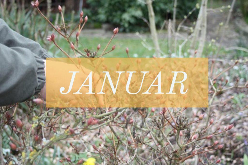 Gartenarbeit im Januar