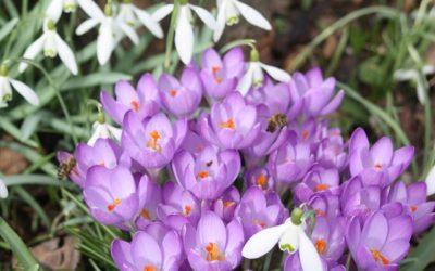 Blogparade: Die schönsten Blumen und Blüten weltweit – Fotoparade
