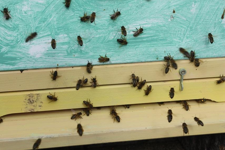Bienenvolk Grundlagen