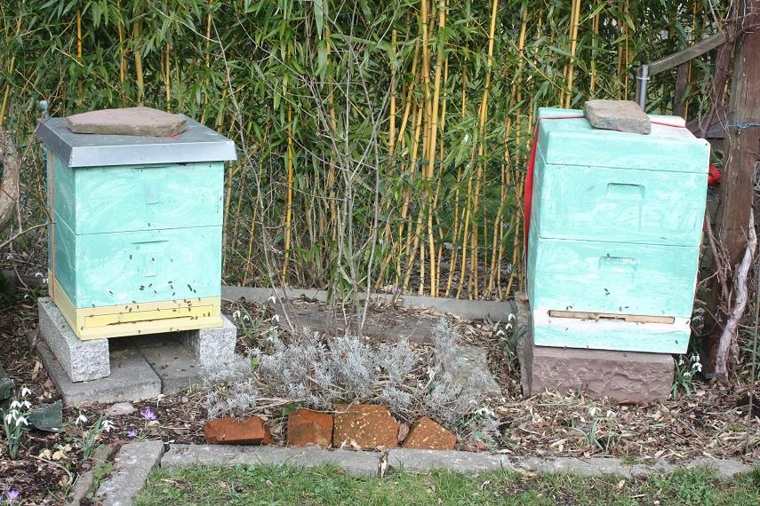 Beute für Bienen