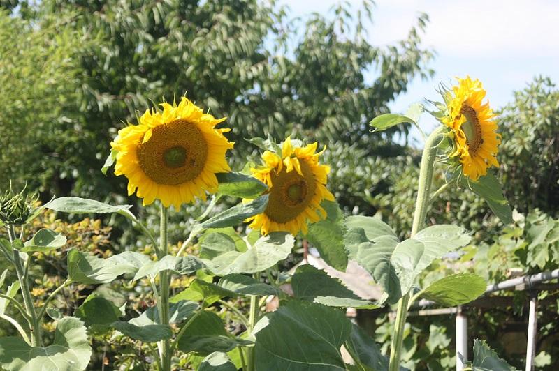 ᐅ Gartenpflanzen - Alle Informationen Zu Allerlei Pflanzen